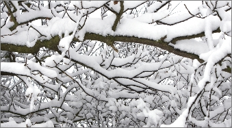 snow-on-tree-branches-forest